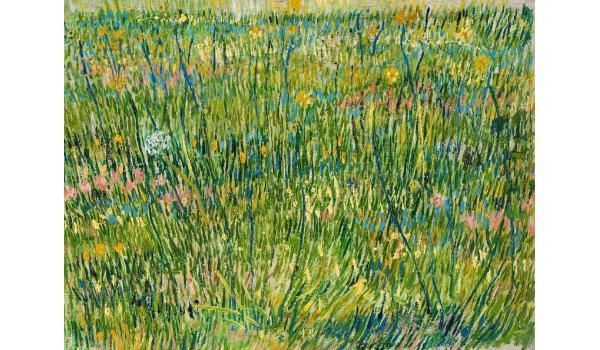 Patch of Grass - Cultura de Algibeira