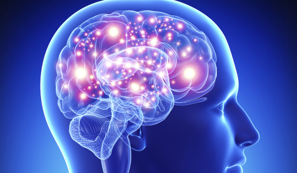 Cérebro - Cultura de Algibeira