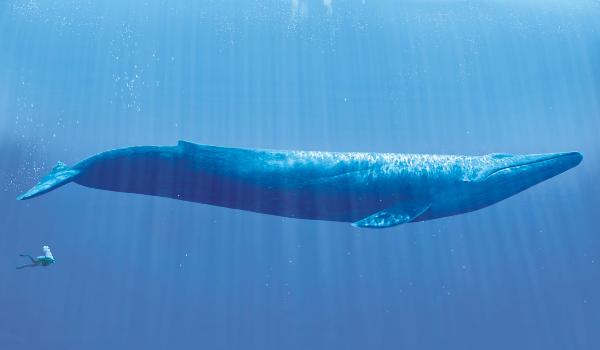 Os dez maiores animais do planeta - Cultura de Algibeira, Bolso, Algibeira, Cultura