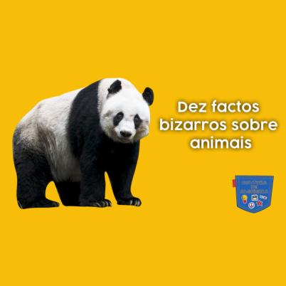Dez factos bizarros sobre animais - Cultura de Algibeira
