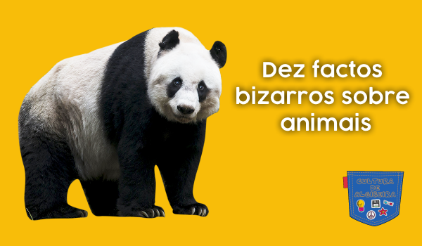 Dez factos bizarros sobre animais - Cultura de Algibeira, Algibeira, Bolso, Cultura