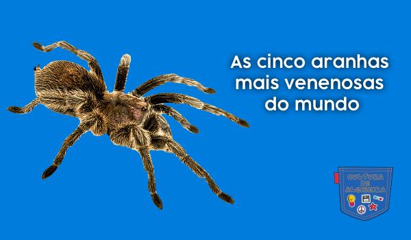 As cinco aranhas mais venenosas do mundo - Cultura de Algibeira