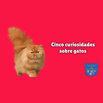 Cinco curiosidades sobre gatos Cultura de Algibeira