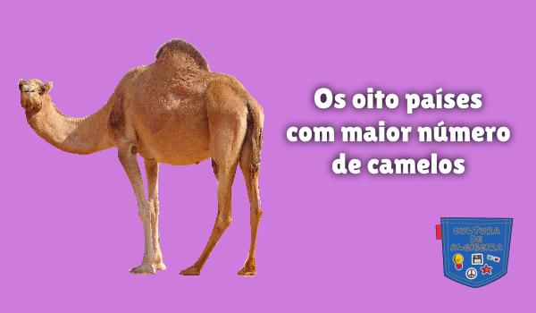 Os oito países com maior número de camelos Cultura de Algibeira