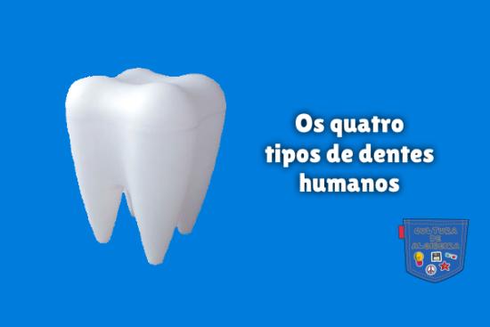 Os quatro tipos de dentes humanos Cultura de Algibeira