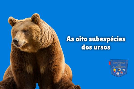 As oito subespécies dos ursos Cultura de Algibeira