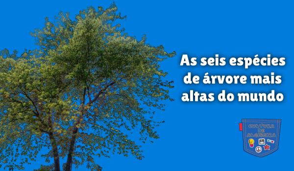 seis espécies de árvore mais altas do mundo Cultura de Algibeira