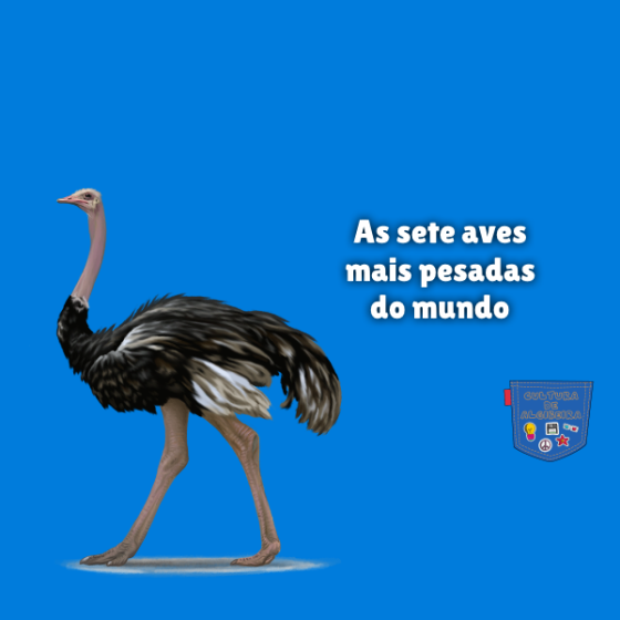 As sete aves mais pesadas do mundo Cultura de Algibeira