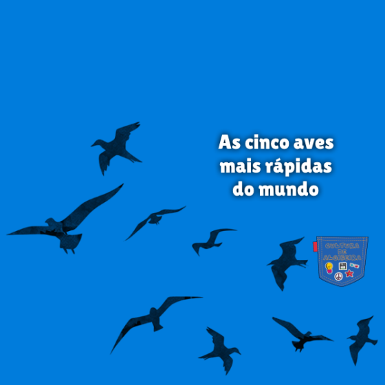 As cinco aves mais rápidas do mundo Cultura de Algibeira