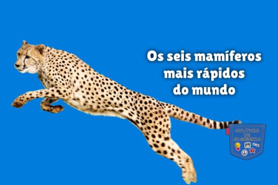 Os seis mamíferos mais rápidos do mundo