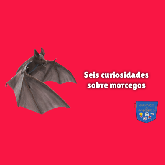 Seis curiosidades sobre morcegos Cultura de Algibeira